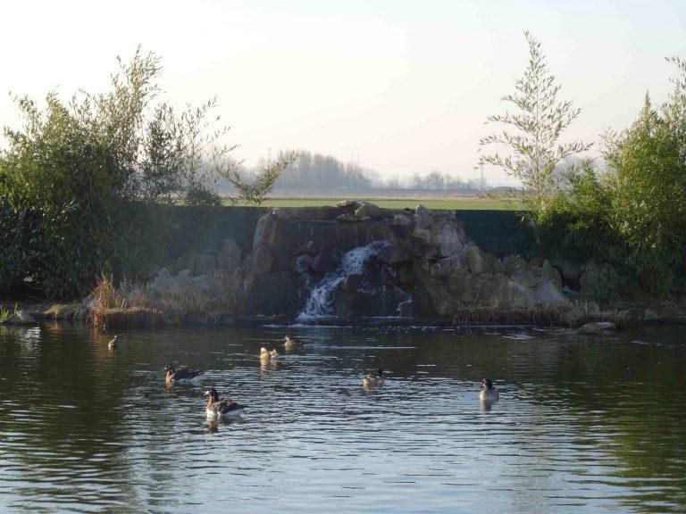 bassin-canard-promenade-ehpad